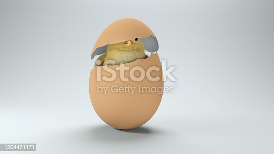 Chick in a broken eggshell on white background