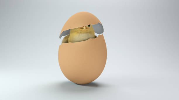 Küken in einer zerbrochenen Eierschale auf weißem Hintergrund – Foto