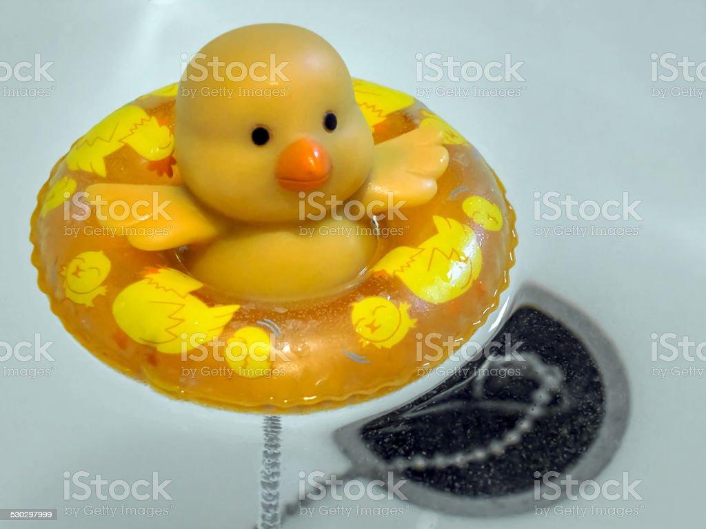 Chick Stock-Fotografie und mehr Bilder von Badewanne   iStock