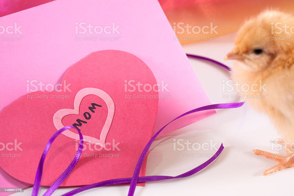 Chick with note to Mom for Mother's Day royalty-free stock photo