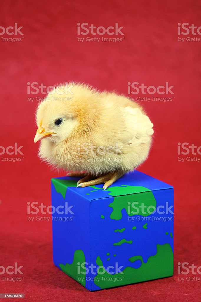 Chick with square map royalty-free stock photo