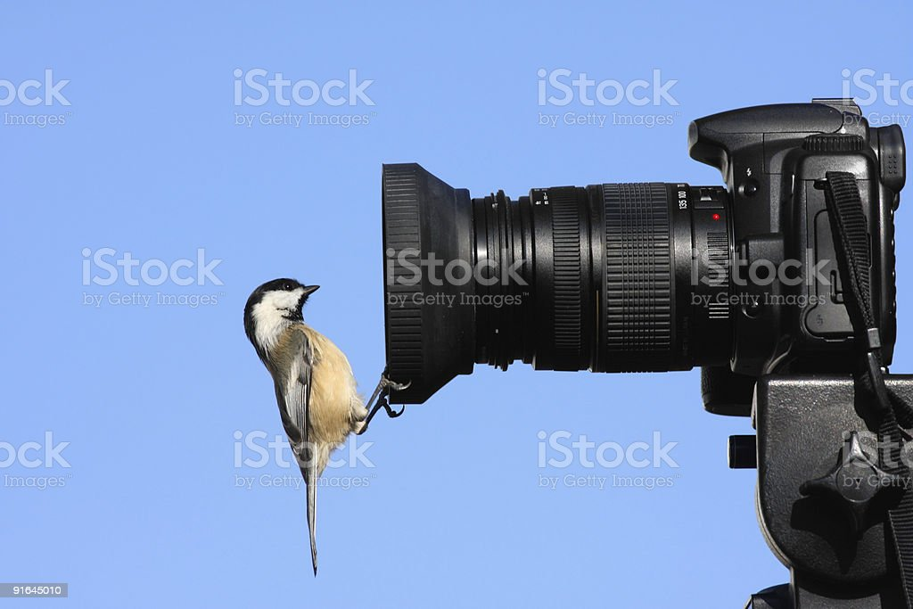 Chickadee on a Camera stock photo