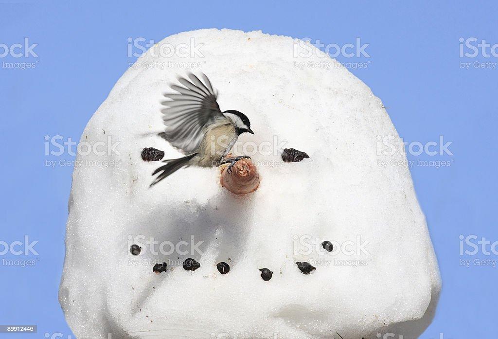 Carbonero en un muñeco de nieve foto de stock libre de derechos