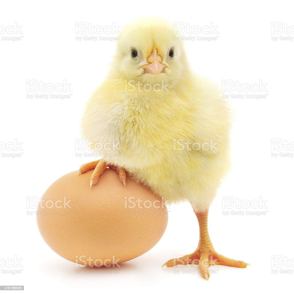 チキン、卵 - ヒヨコのロイヤリティフリーストックフォト
