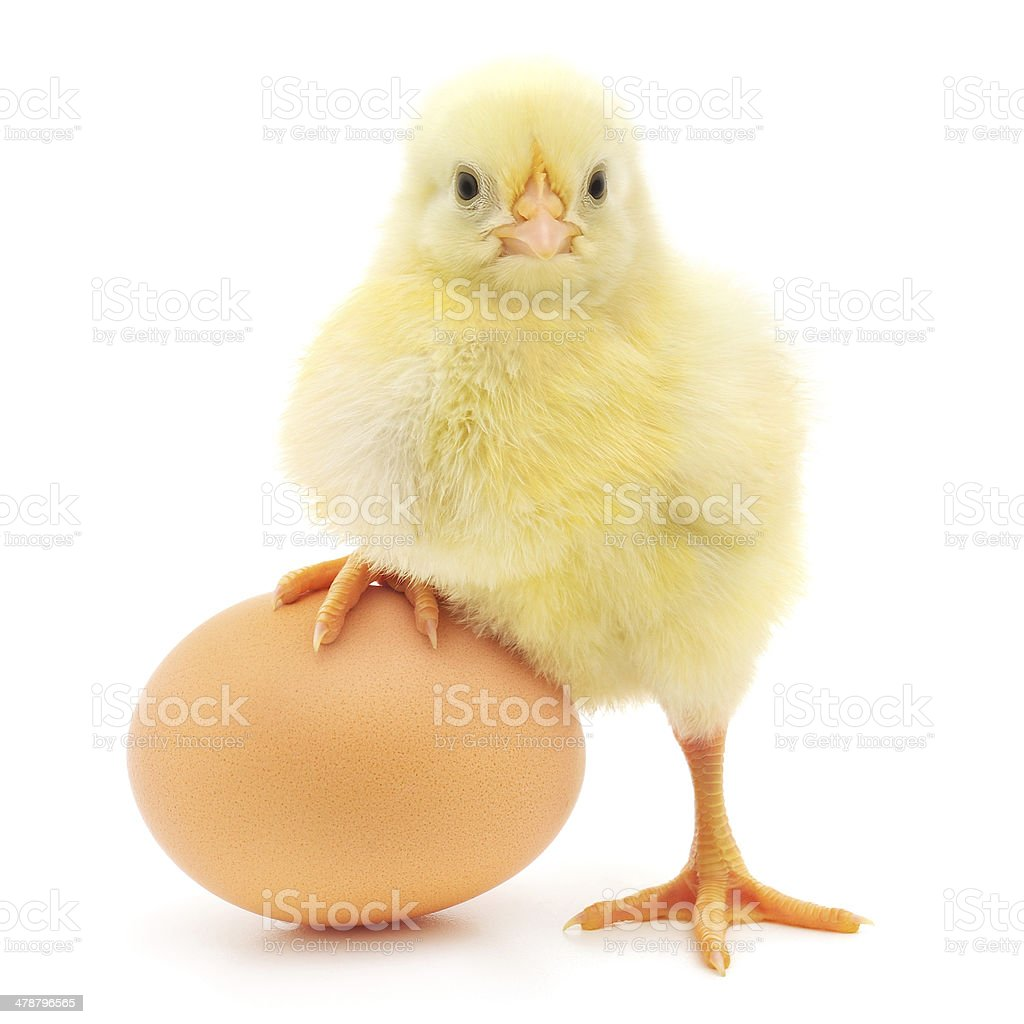 chicken and egg stock photo