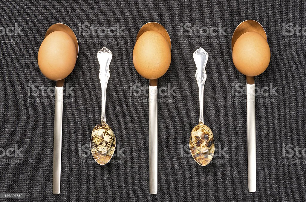 Chicken and quail eggs in spoons royalty-free stock photo