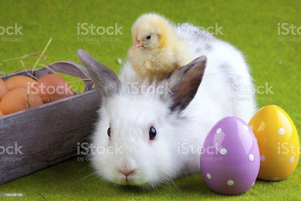 Chicken and Rabbit stock photo