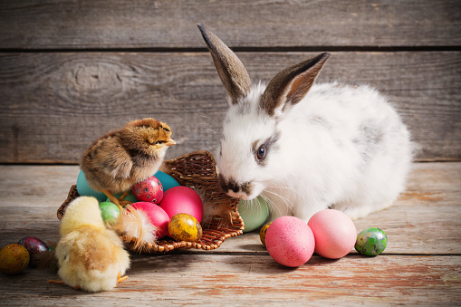 istock chicken and rabbit  with Easter eggs on wooden background 624497736