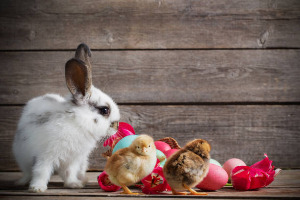 chicken and rabbit with Easter eggs on wooden background stock photo