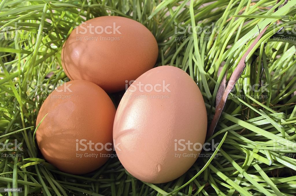 Chicken brown egg royalty-free stock photo