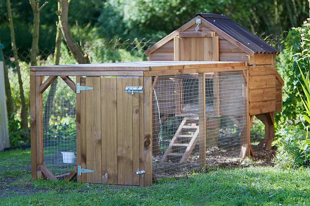 Chicken Coup. – Foto