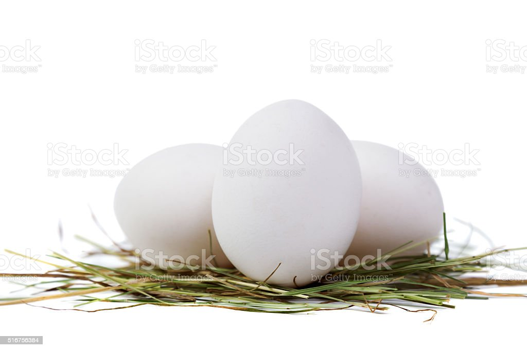 Chicken egg in the straw stock photo