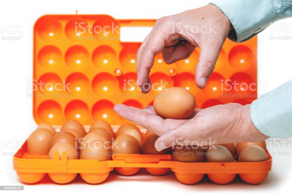 Chicken egg lies in palm of plastic container stock photo