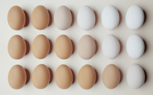 chicken eggs aligned and ordered