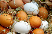 Chicken eggs are in the straw. Eggs are white and brown.