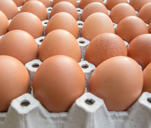 Chicken eggs in paper Panel stock photo
