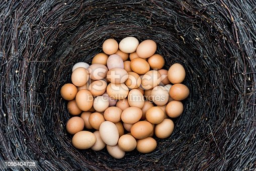 Yellow fresh chicken eggs in a nest of dry bushes