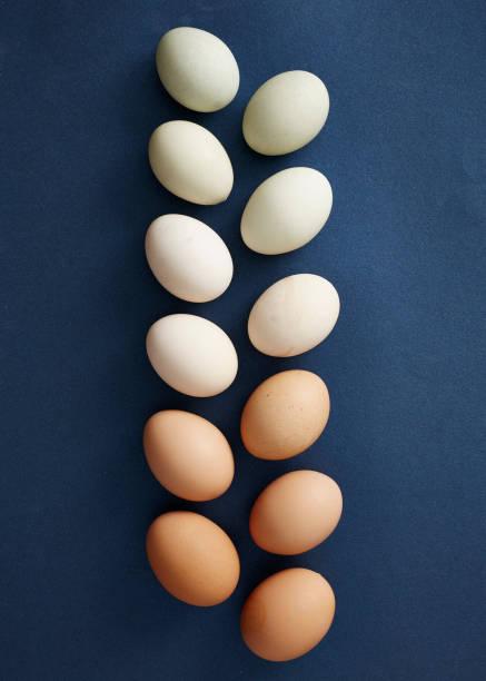 hühnereier, die in der reihenfolge der farbe - sonntagsbrunch stock-fotos und bilder
