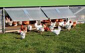 Chicken farm in Germany