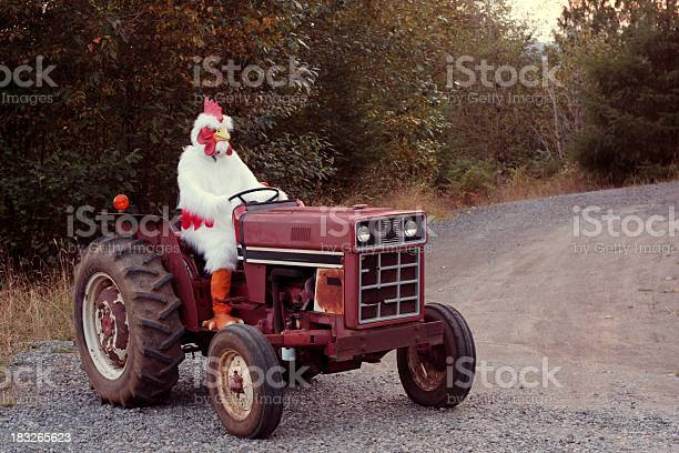 Chicken Farmer On A Tractor Stock Photo - Download Image Now