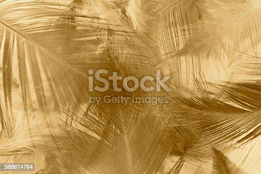 istock Chicken feather texture background 588614764