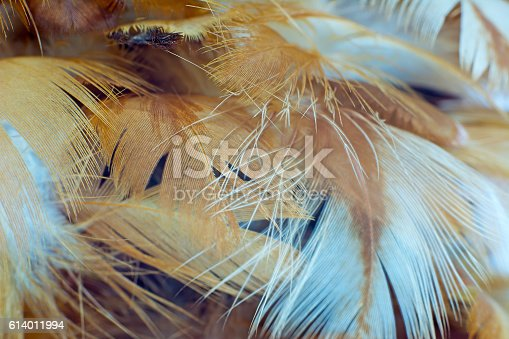 istock Chicken feather texture background 614011994