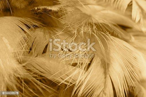 istock Chicken feather texture background 614403578