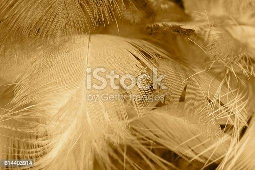 istock Chicken feather texture background 614403914