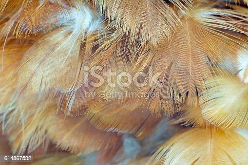 istock Chicken feather texture background 614867532