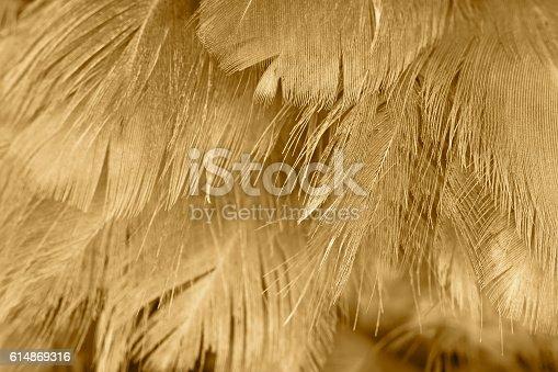 istock Chicken feather texture background 614869316