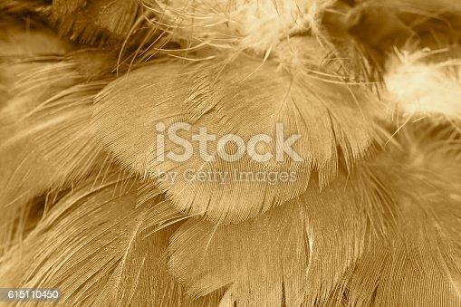 istock Chicken feather texture background 615110450