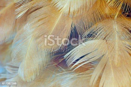 istock Chicken feather texture background 617382398