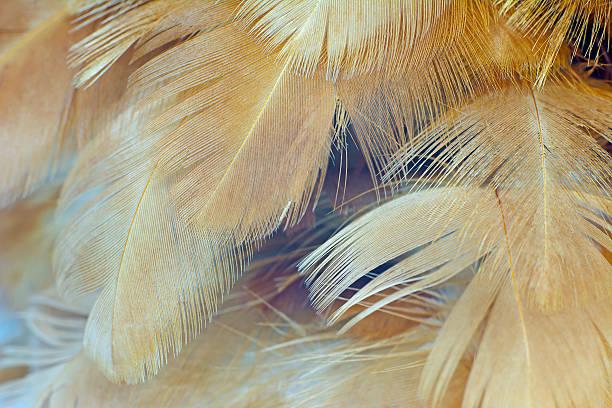 chicken feather texture background - engel zeichnen stock-fotos und bilder