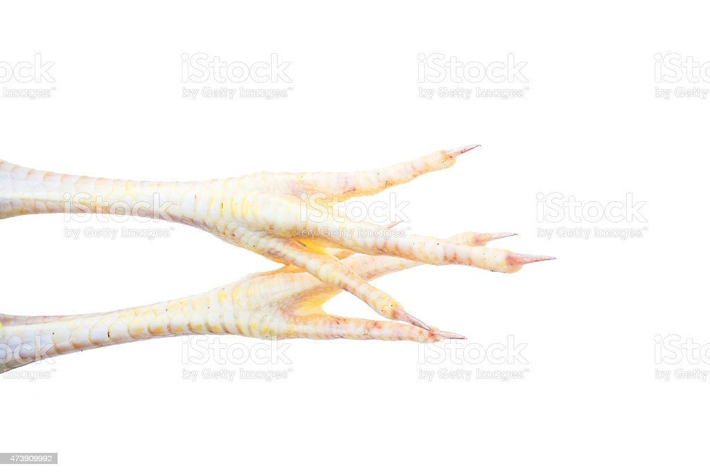 Chicken Foot isolated white background stock photo
