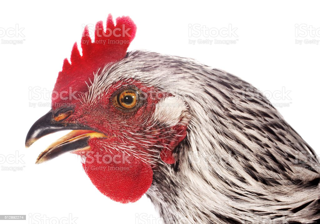 Chicken Head Profile Close Up Stock Photo & More Pictures of ...