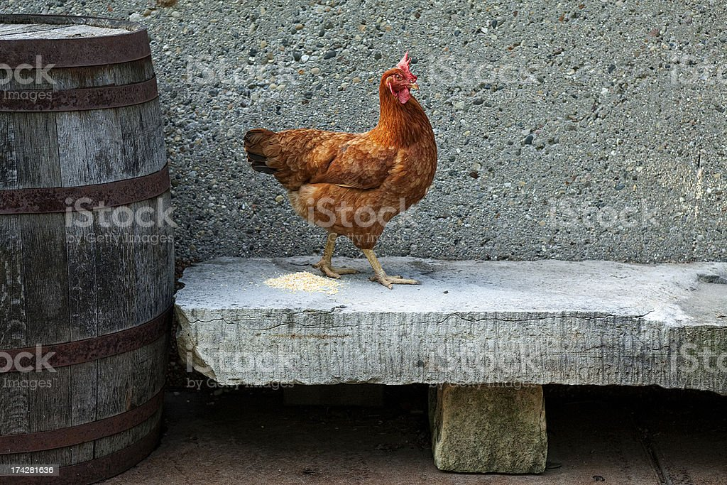 chicken on a stone bench royalty-free stock photo