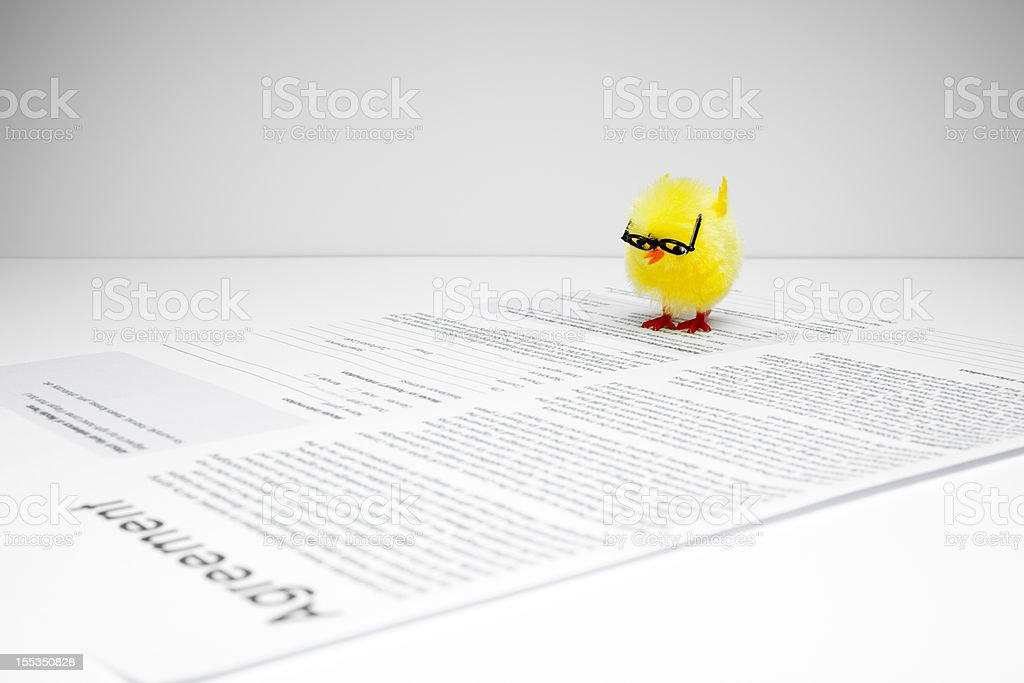 Chicken Reading Agreement - Nerd  Chick Humor Fun Easter Business royalty-free stock photo