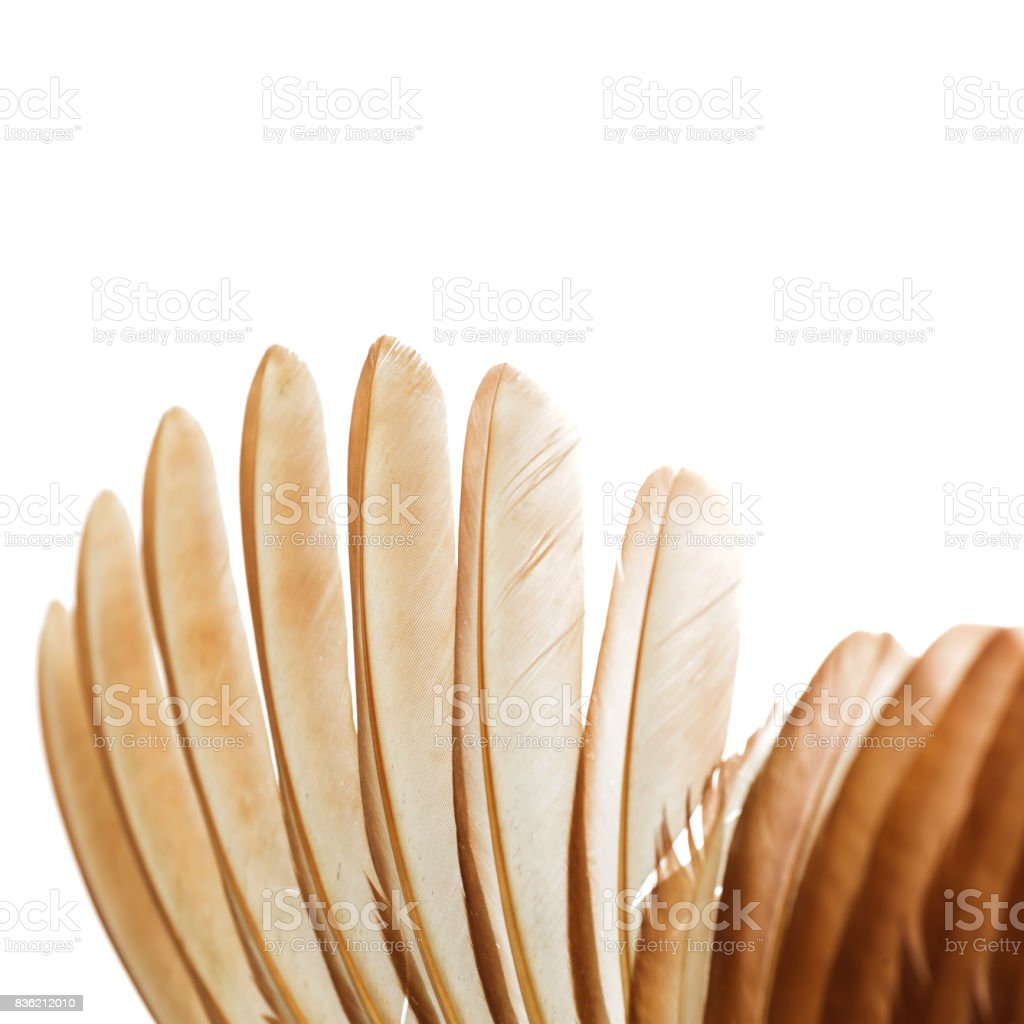 Chicken wings on a white background stock photo