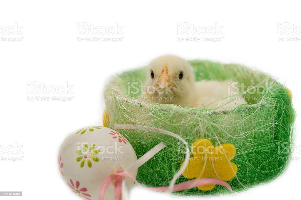 Pollo con l'uovo di Pasqua foto stock royalty-free