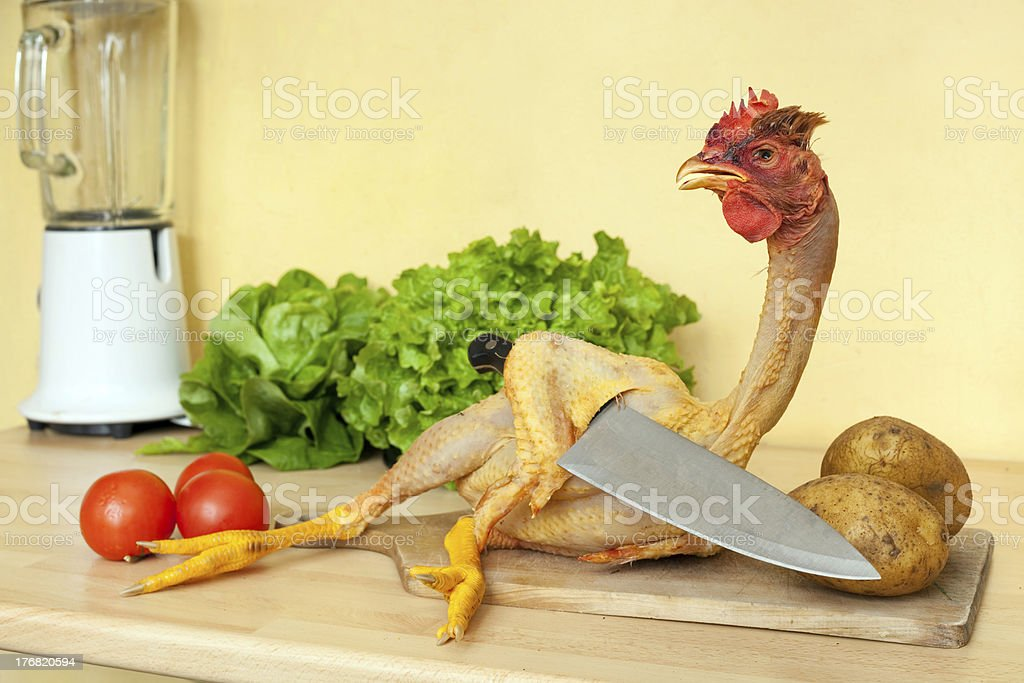 chicken with knife royalty-free stock photo