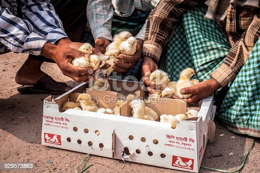 istock Chickens at a local Market 529573863