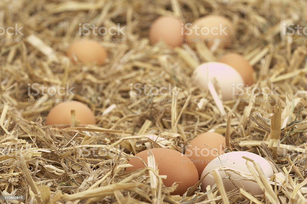 chickens eggs royalty-free stock photo