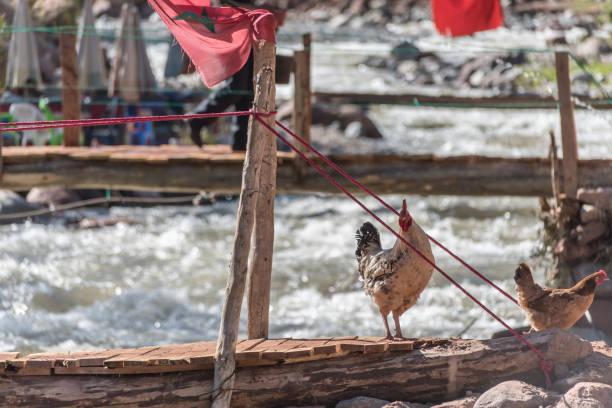 Chickens on a bridge over a stream in Morocco stock photo
