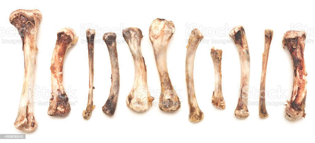 chickn bones stock photo