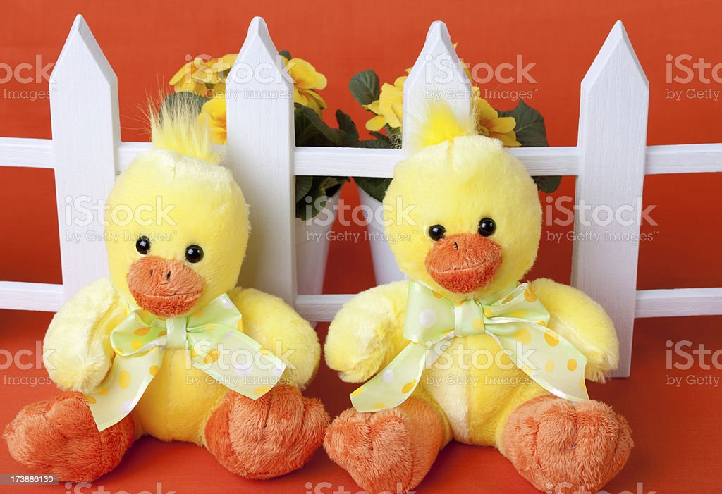 Chicks Along Fence stock photo