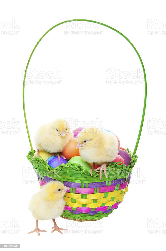 Chicks in Easter Basket royalty-free stock photo