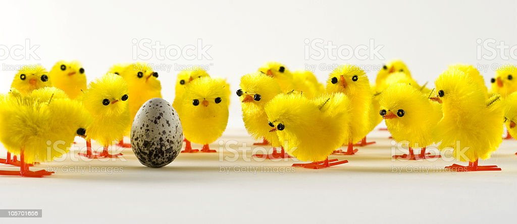 Chicks looing at an egg royalty-free stock photo