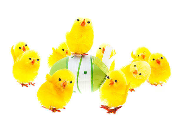 Chicks with easter egg isolated on white stock photo