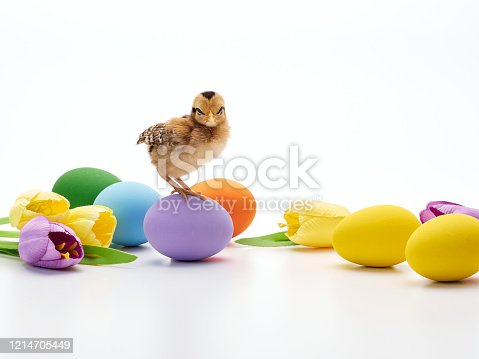 922661892 istock photo Chicks with easter eggs and yellow tulips on white background. 1214705449