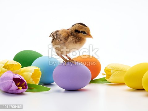 922661892 istock photo Chicks with easter eggs and yellow tulips on white background. 1214705465